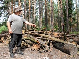 ПРАВО НА ЛЕС: заготовка древесины для собственных нужд требует нормативно-правового регулирования