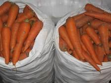 Болезни моркови: РАСПОЗНАТЬ И ОБЕЗВРЕДИТЬ!