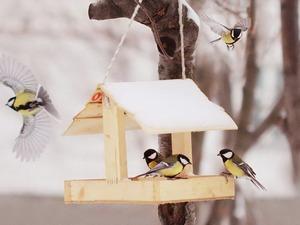 Покорми птиц зимою - послужат тебе весною